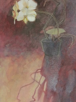 Backlit Orchid, Watercolour Still Life