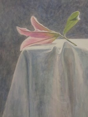 Lily in the Light, Watercolour Still Life